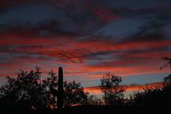 Sunset August 18 17 #24 (Az Skies Photography) Tags: sun set sunset dusk twilight nightfall cloud clous sky skyline skyscape sahuarita arizona az sahuaritaaz august 18 2017 august182017 arizonasky arizonaskyline arizonaskyscape arizonasunset canon eos 80d canoneos80d eos80d canon80d red orange yellow gold golden salmon black 81817 8182017