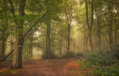 Good Morning Woods (Captain Nikon) Tags: atmospheric moody loughborough charnwood leicestershire jubileewoods outwoods england eastmidlands landscapes landscapephotography nikond7000