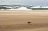 А нам всё равно... (klgfinn) Tags: autumn balticsea bird landscape sand sea seaspray shore splashes storm water wave балтийскоеморе берег брызги вода волна море осень пейзаж песок птица шторм