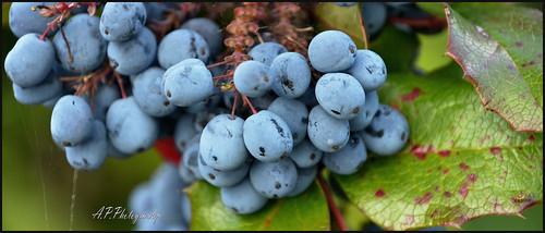 """01.09.17 """"Blue"""" Berries"""