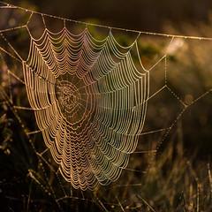 Morning (Ashild Andrea) Tags: blefjell mountain outdoors autumn fjell moss lichen heather lyng mose myr skog