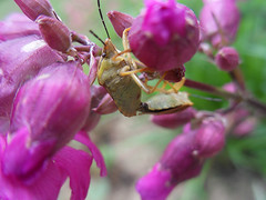 When The Time Comes (AleksandraMicic) Tags: photography photographs photos photo image images slike slika flickr aleksandramicic micicart micicartstudio nature priroda plant insect insects insekti macro