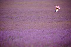 """Pink Umbrella (""""Stròlic Furlàn"""" - Davide Gabino) Tags: lavender girl woman umbrella pink ombrello rosa donna ragazza lavanda francia provenza provence"""