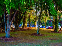 "The Cairns Esplanade-Spring • <a style=""font-size:0.8em;"" href=""http://www.flickr.com/photos/146187037@N03/36929627462/"" target=""_blank"">View on Flickr</a>"