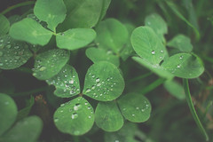 IMG_9037 (J. Adams.) Tags: bokeh 650d dslr canon lofi lomography lomo faded fade aesthetic mindfulness mindful chilled chill quiet relaxing relax growing grow outdoors outside earth ground nature leaves leaf green grass plants plant clover