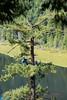 EOG-29.jpg (Joel Spooner Photography) Tags: arblife arborist bc expeditionoldgrowth joelspooner joeliphoto climbtrees exploretrees explorebc inspire learntoclimb oldgrowth treeclimbing