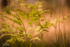 Summer dreams (AnzhN) Tags: summer forest nature day daylight availablelight green