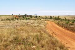 Parque Nacional da Serra da Canastra1 (Conexão Selvagem) Tags: observaçãodeaves serra canastra parque nacional cerrado aves bird wildlife galito rapina gavião
