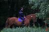 La Garde républicaine dans le Bois de Boulogne (mamnic47 - Over 8 millions views.Thks!) Tags: etang etangdelongchamp 14092017 sigma150600mm 6c8a2327 garderépublicaine cheval cavalier patrouille