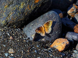 Butterfly on the rocks!!!