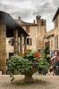 IMGP0750 (fLobOOk) Tags: cordes sur ciel cordessurciel aveyron tarn village médiéval histoire chien chat france europe garonne tarnetgaronne