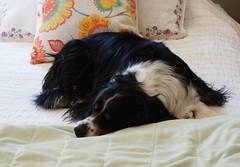 Mari on the Bed (rolandmks7) Tags: sonynex5n naturallight takumar 50mm f14 sleeping bed availablelight