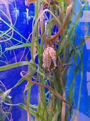SeaLife Scheveningen (Elad283) Tags: holland haag hague thehague denhaag netherlands nederland scheveningen sealife aquarium sea seahorse