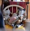 old friends (Danny W. Mansmith) Tags: kittysitting ballard dannymansmith