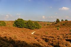 National Park Veluwezoom (H. Bos) Tags: posbank herikhuizerveld veluwe veluwezoom natuur nature bossen woods nationalpark nationaalpark gelderland autumn herfst