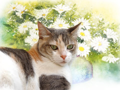 Celeste and daisies (Ani Carrington) Tags: cat daisies watercolor flowers