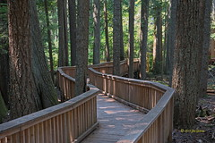 """A Walk In THe Park (joeinpenticton Thank you 1.4 Million + views) Tags: washington highway 20 north cascades national park us usa america united states scenic trail walk board state mountains range mountain """"north park"""" """"happy creek trail"""" cascadeloop"""
