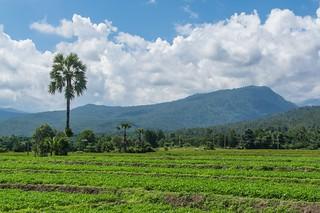 doi inthanon - thailande 2
