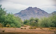 Scottsdale walkways (Coisroux) Tags: mcdowellmountains roads walkway dirt vegetation scottsdale arizona mountains trees nikond d5500 nikond5500