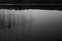 stillness (ΞSSΞ®®Ξ) Tags: ξssξ®®ξ pentax k5 smcpentaxda1855mmf3556alwr lake reflection monochrome tones evening stillness water hälsingland sweden tranquillity peaceful quiet blackandwhite calm grass abstract