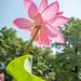 Tenth Lotus Day