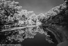Bull Creek Greenbelt Reflection (infrared) (wanderingYew2 (thanks for 3M+ views!)) Tags: 120 6x9 bullcreekgreenbelt fuji6x9 fujigw690 r72filter texas blackandwhite blackandwhitefilm film filmscan infrared infraredfilm mediumformat reflectingpool reflection rolleiinfraredfilm rolleiinfrared400