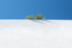 Over the tropical garden wall (josemanuelerre) Tags: plant green hipster decor nature natural white blue sky tropical environment street outdoors urban vegetal palmtree shadows composition modern contemporary little tiny lonely minimalism minimal clear silence quiet stilllife popart poppy pop palette inspiration minimalist detail pantone color city daily day light summer tale far reach