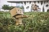 Danbo  birdwatching (alimoche67) Tags: josejurado sony strobist sesion muñecos alpha toy danboard