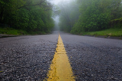 the road less traveled (Marc McDermott) Tags: road fog green trees low perspective texture yellow