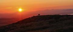Top of the morning (xDigital-Dreamsx) Tags: nature cattle sheep livestock hills mountain mountains rural countryside country outdoor bush sun scotland scenery sunlight sky sunshine sundown sunset scenic scottish summer sunny serene sunrays sunrise red redsky green golden eos skyline horizon coth5