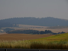 Aug3,2017 DSC00240 Looking at Paradise Ridge on a smokey day (terrygray) Tags: scenic palouse harvest forestfiresmoke