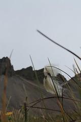 Stokksnes (laura.dodo88) Tags: iceland islanda vikingvillage vikings stokksnes south east road trip canon 1100d rocks rockmountain mountains
