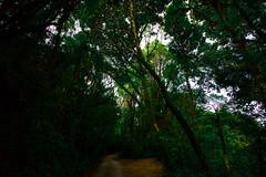 IMG_9531 (Light Of |Hope|) Tags: cameronhighland deepforest
