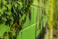 Behind These Walls (jijake1977) Tags: oahu hawaii island property wall boundary ivy green grafitti