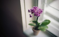 home, film ()**sarah**() Tags: portra orchid film