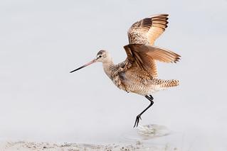 A Hop Landing
