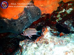 """Kalymnos Diving • <a style=""""font-size:0.8em;"""" href=""""http://www.flickr.com/photos/150652762@N02/36447049782/"""" target=""""_blank"""">View on Flickr</a>"""