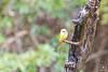 Rain Bird... (Charlie_Joe) Tags: india bandipur karnataka travel wildlife nature bird rain incredibleindia indiatourism canon safari animal nationalpark