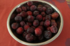 223/365: Plum Tree Bounty