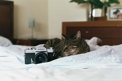 The guardian of Konica :) \\ Home (andreseabra223) Tags: olympusom30 olympus om30 35mm film analog fujicolor superia xtra 400 50mm zuiko50mm zuiko om lenses asa istillshotfilm cat konica autoreflex t3 photography