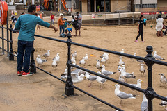 me me me (pamelaadam) Tags: 2016 animal digital summer scarborough engerlandshire bird sea people lurkation august digtal fotolog thebiggestgroup holiday2016