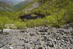 Las Lagunas de Muniellos (Ahio) Tags: lake muniellos asturias 2017 oak birch forest woodland roble quercus d800e nikon manfrotto zf2 zeiss distagont2821 21mm singhray polarizer
