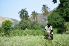 NP_Haiti3