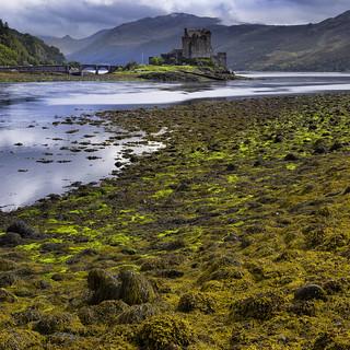 Scottish Seaweed