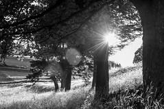 łapiąc promienie słońca (MichalKondrat) Tags: natura masywśnieżnika niebo pejzaż czarnobiałe krajobraz drzewa blackwhite polska 2017 bw sierpień kotlinakłodzka sudety przyroda dolnośląskie zieleń góry chmury