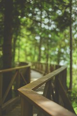 Some wine and a walk (Tracey Rennie - away) Tags: eleven fence forest bokeh bc trees walkway sunshinecoast flickrcation