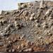 Trace fossils in siltstone (Hinton Formation or Bluefield Formation, Upper Mississippian; Oakvale School outcrop - Rt. 112 roadcut, Oakvale, West Virginia, USA) 4