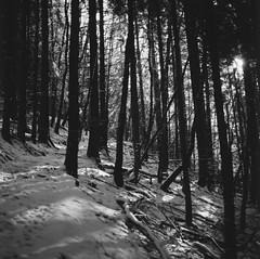 Bosco, Parusciana, Claro, 11306 (scoiattolo10) Tags: hasselblad500cm hasselblad 500cm 80iso 80s rollei rolleiretro80s bosco bosque bois bosques woods wald ticino neve neige snow schnee svizzera schweiz suisse switzerland 120 6x6 bw epsonperfectionv850pro
