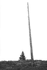 Hiking to Taggart & Bradley Lakes (Grand Teton NP) (@CarShowShooter) Tags: beavercreek geo:lat=4370409465 geo:lon=11074584737 geotagged moose unitedstates usa adventure deadtrees explore exploring grandteton grandtetonmountainrange grandtetonnationalpark grandtetons hiking httpsenwikipediaorgwikigrandtetonnationalpark landscape nationalpark nationalparkservice naturalwonder nature outdoor pinetree scenic scenicspot scenicview spring spring2017 springwildflowers teton tetoncounty tetonmountainrange tetons tourism touristattraction trail travel travelblog travelblogphoto travelphoto travelphotography travelingadventures tree trees usnationalpark usnationalparkservice unitedstatesnationalpark vista wildflowers wildlife worldadventures worldtravel wy wyoming