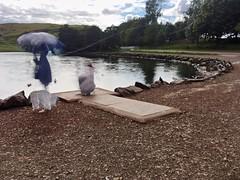 iPhone 2017 08 26 (Sibokk) Tags: digital iphone photography scotland uk edinburgh slowshutter slowshutterapp